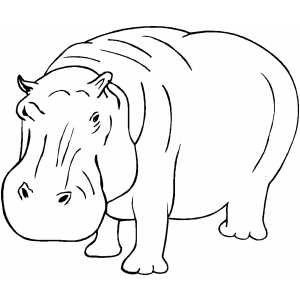 Hippopotamus colouring pages page 2