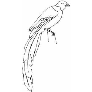 magpie bird colouring pages page