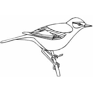 Birds On Branch Colouring Pages