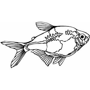 Tetra Fish Coloring Pages Coloring Coloring Pages