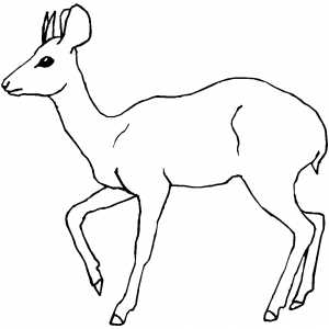 Marching antelope coloring sheet for Small animal coloring pages